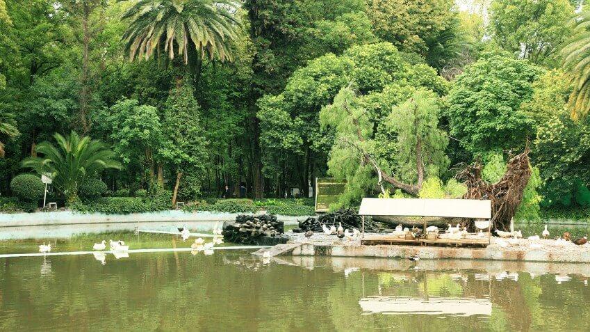 mejores parques plazas jardines roma condesa parque mexico 3